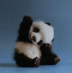 WACC 2016 Bye Panda Pals!